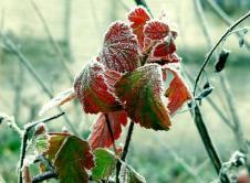 Prognoza pogody na kolejne dni nie jest zbyt optymistyczna. Jesienno-zimowa aura da się we znaki. Silny wiatr w parze ze śniegiem i deszczem będzie nam doskwierał przez kolejne dni. Wiatr, który już od dziś dał się we znaki zwiększa swoją prędkość, wiał będzie cały czas z północnego-zachodu. W związku z nasilającym się wiatrem Instytut Meteorologii […]