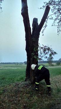 drzewowroblewo2