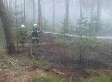 Strażacy oraz Nadleśnictwo Wronki walczyli z pożarem lasu na terenie leśnictwa Lutyniec. Do akcji zaangażowano pięć zastępów straży pożarnej. Zawiadomienie o pożarze poszycia leśnego wpłynęło w niedzielę, kilka minut po godzinie 19. Jako pierwsze na miejsce pożaru dotarły służby Nadleśnictwa Wronki, które przystąpiły do gaszenia pożaru, a także nakierowały nadjeżdżające zastępy straży pożarnej. W akcji […]