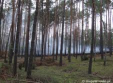 5 strażackich zastępów walczyło dzisiaj wieczorem z pożarem lasu na terenie leśnictwa Chojno, przy leśniczówce w Tomaszewie. Przed 17:30 dwa zastępy OSP Wronki zostały zadysponowane do pożaru lasu w Tomaszewie, między Mokrzem a Chojnem, niedaleko drogi wojewódzkiej 149. Na miejscu działały już zastępy OSP Chojno i OSP Rzecin, następnie dotarła OSP Jasionna i PSP Szamotuły. […]
