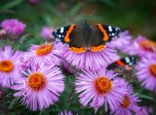 Wiosna już małymi krokami zbliża się do naszych drzwi. Choć na pierwszy rzut oka tego nie widać, to w naszych ogrodach pojawiają się już narcyzy, tulipany, hiacynty, cebulice oraz inne wiosenne rośliny ozdobne. Skoro w kalendarzu mamy początek marca jest to najlepszy czas, aby zacząć myśleć nad pracami w ogrodzie, które wykonamy w najbliższym czasie. […]