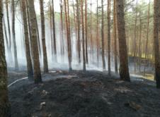 Koniec weekendu i początek tygodnia strażaków z gminy Wronki zdominowany został przez pożary na terenie Puszczy Noteckiej. Do największego z nich doszło w niedzielę w okolicach Gogolic. W niedzielę rano leśnicy spostrzegli dym unoszący się nad lasem, pożar zlokalizowano na terenie leśnictwa Gogolice. Pierwsze informacje mówiły o płonących dwóch hektarach poszycia leśnego w 50-letnim borze […]