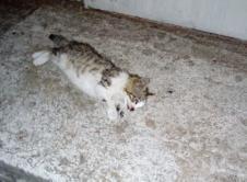 Poszukiwani są świadkowie możliwego skatowania kota przez 11-letniego mieszkańca Wronek. Chłopiec miał deptać, kopać i rzucać zwierzęciem. Do zdarzenia miało dojść w środę rano na osiedlu Zamość w pobliżu świetlicy. Czytelniczka widziała chłopca, który z nieznanych przyczyn zakatował małego kota na śmierć. Z jej relacji wynika, że 11-latek miał go deptać, kopać i nim rzucać. […]